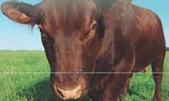 Tarquino y la ganadería argentina
